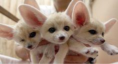 Cute x3!!!