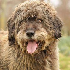 MorphÉe - 4383   Type : Chien croisé Sexe : Mâle Age : Senior Taille : Grand Lieu : Hauts-de-Seine - 92 (Île-de-France)  Refuge :  REFUGE SPA GRAMMONT - GENNEVILLIERS(Hauts-de-Seine) Tél : 01 47 98 57 40 Adoption, Refuge, Animal Rescue, Dogs, Animals, Funniest Pictures Ever, Adopt A Dog, Big Dogs, Tops