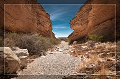 The #Texas #desert has never really appealed to me... until I saw the photography of Jeff Lynch.  #BigBendNationalPark