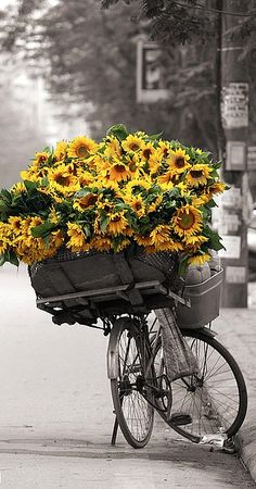 Love bikes and sunflowers!
