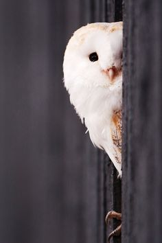 What is this little owl thinking?  What has he got his eye on?  What will he do next?  Can you draw him?