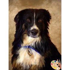 Border Collie Dog Portrait 508