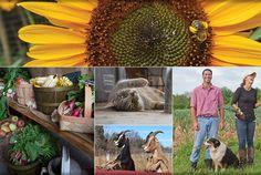 Discover the Willowsford Farm, A Community Farm in Loudoun County