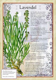Lavendel http://www.kraeuter-verzeichnis.de/