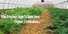There is good news for small organic farming operations when it comes to getting organic certification.
