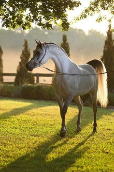Wonderful world of horses .... Beautiful, beautiful, simply Beautiful!