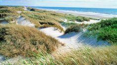 Dunes by Jutland's North Sea coastline  #sea #coast #holiday