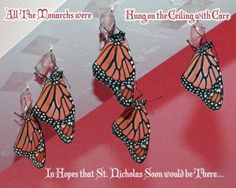 The Night Before Chrysalis- A Monarch Butterfly Christmas Story