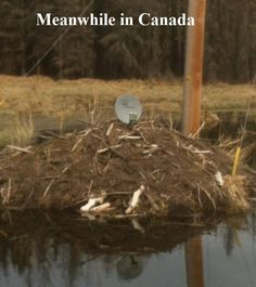 living off the grid? Canada Jokes, Canada Eh, I Am Canadian, Canadian History, Meanwhile In Canada, Capital Of Canada, Get Off The Grid, Laughter The Best Medicine, Living Off The Land