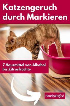 """Im Gegensatz zum Urinieren, bleibt die Katze beim Markieren stehen. Dabei entsteht keine Lache, sondern Urinflecken an Wänden oder Polstern. Da das Tier damit sein """"Revier"""" kennzeichnen möchte, ist der Geruch sogar noch stärker als beim Urinieren."""