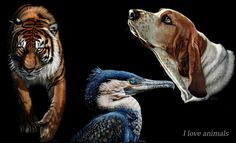 20 Beautiful and Realistic Animal Paintings by Heather Lara. Follow us www.pinterest.com/webneel