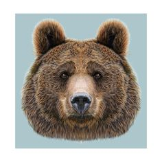 Illustrated Portrait of Bear on Blue Background Reprodukcje autor ant_art19 w…