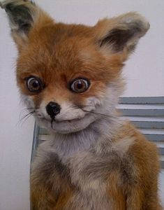 Celebrity: Stoned Fox may be a badly stuffed piece of taxidermy but that hasn't stopped him finding fame