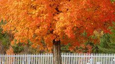 Falling for Fall    ...Rumford, Maine.. so pretty!