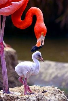 mommy and baby flamingo! :)