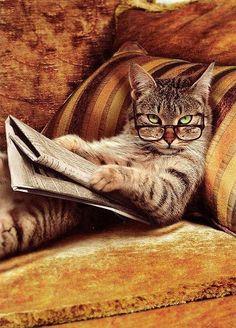 qué pasa flaca? nunca viste un gato leyendo?