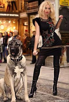 Kangal dogs are indispensable for women.