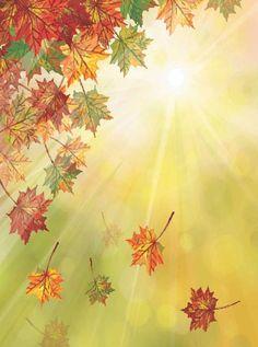 7612 Sunshine Bokeh with Autumn Leaves Backdrop