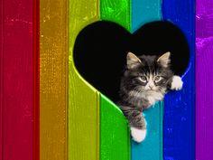 A POP OF COLOR! ▶ Rainbow Kitty