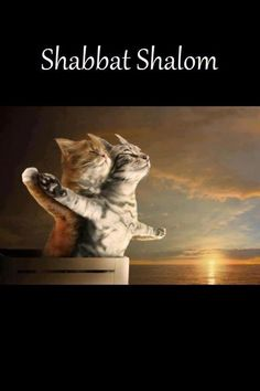 Shabbat Shalom Loving Cats Sabbath Rest 505c2474cb99a