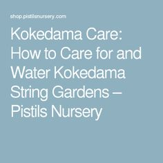 Kokedama Care: How to Care for and Water Kokedama String Gardens – Pistils Nursery