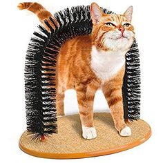 Mytop Self Scratching Base Cat Kitten Grooming Arch Catnip Toy ** Read more info by clicking the link on the image. #Cattoyideas