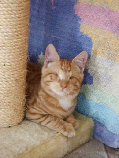 Blind Cat Rescue is a wonderful organization in NC that takes in blind cats. I have happily provided thousands of dollars in product funding to them. An extremely well run organization where the money really goes to helping the cats!
