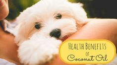 Coconut oil is not only for humans! It is also great for dogs and cats too! It can help to treat a lot of things! What we are actually now only...