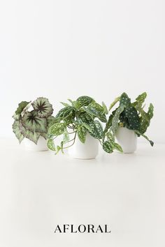 Incorporate your favorite faux plants and greenery into your everyday home decor. No matter the season, artificial plants and stems will give your home decor the fresh finishing touch it needs. Skip the maintenance and switch to faux plants! Shop trending fake plants at Afloral.com.