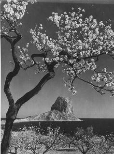 Almendros en flor #Calpe #Calp
