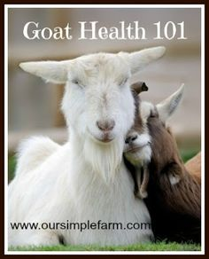 Our Simple Farm: Goat Health 101 Week - Mastitis