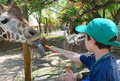 Behind the Scenes Tour Reid Park Zoo Tucson, AZ #Kids #Events