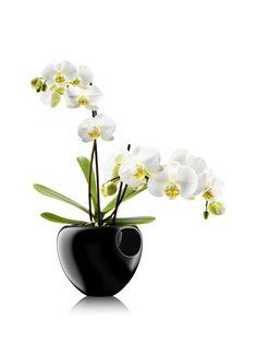Orchid pot by Eva Solo