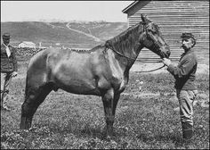 Comanche, the only survivor from the Battle of the little Big Horn, who survived his wounds and lived a long life. Comanche was owned by Capt. Us History, American History, Custer Battlefield, Battle Of Little Bighorn, Last Stand, War Dogs, Vintage Horse, Beautiful Horses, Pretty Horses