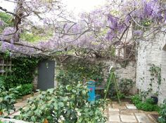 Wisteria. The spectacular scented flowers of wisteria appear in spring on the bare vines, with leaves following soon afterward. Train this climber along pergolas or fences, or keep it trimmed as a shrub. Wisteria will tolerate frost but prefers a sunny spot. Eclectic Landscape by {environmental concept}