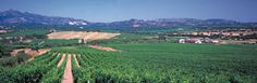 Weingut Cantina del Vermentino ∼ Sardinien ∼ Italien - http://weinblog.belvini.de/weingut-cantina-del-vermentino-sardinien-italien
