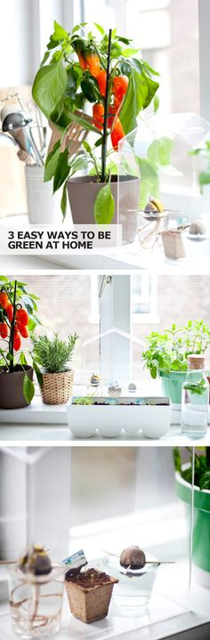 Make being green a part of your everyday life with these three eco-friendly ways to be green at home!