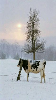 Winter in the country.