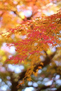 2013.11.23撮影 一勝寺の紅葉