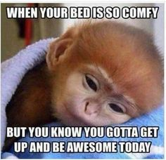 Start your day with these funny good morning memes. Share some humor, fun, sarcasm and encouragement. We have a funny morning meme for every humor type Dating Humor, Funny Cute, The Funny, Funny Memes For Him, Romantic Good Morning Quotes, Cute Morning Quotes, Saturday Morning Quotes, Saturday Memes, Morning Jokes