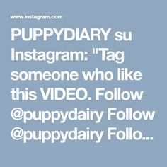 "PUPPYDIARY su Instagram: ""Tag someone who like this VIDEO. Follow @puppydairy Follow @puppydairy Follow @puppydairy Credit @suptarbono 🐶"" • Instagram"