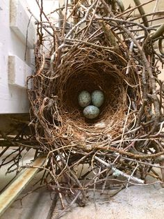 Mocking Bird Nest at Artist's Studio