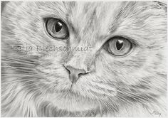 Katzenportrait - A4 https://www.facebook.com/Portraits.und.mehr.nach.Fotovorlage