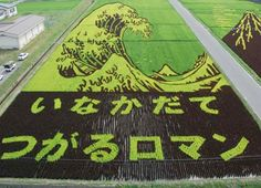 Better  picture of the rice field artwork. I'm amazed