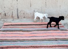 Pampa Rugs - put a goat on it!