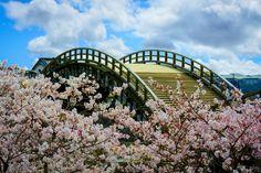 Cherry Blossom Season, Kintai Bridge, Iwakuni, Yamaguchi, Japan