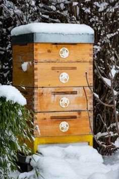 3 Fascinating Facts How Honey Bees Survive Winter! Survival Items, Survival Prepping, Survival Skills, Honey Bees, Honey Bee Facts, Plants To Attract Bees, Bee Do, Overwintering