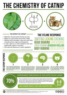Why do cats go crazy for catnip? Here's a look at the chemical compound that causes the effect, as well as why some cats aren't ...