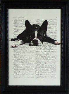 Boston Terrier Dictionary-want one