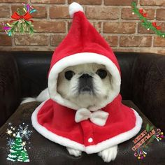Puppy Pictures, Puppy Pics, Japanese Chin Puppies, Pekingese Dogs, Teacup Puppies, Holiday Pictures, Daddys Girl, Puppy Love, Dog Cat